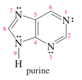 Draw the structure of purine.