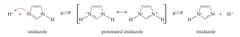 IMPORTANT: * when imidazole becomes protonated, the nitrogens become chemically equivalent (isoelectronic) due to resonance